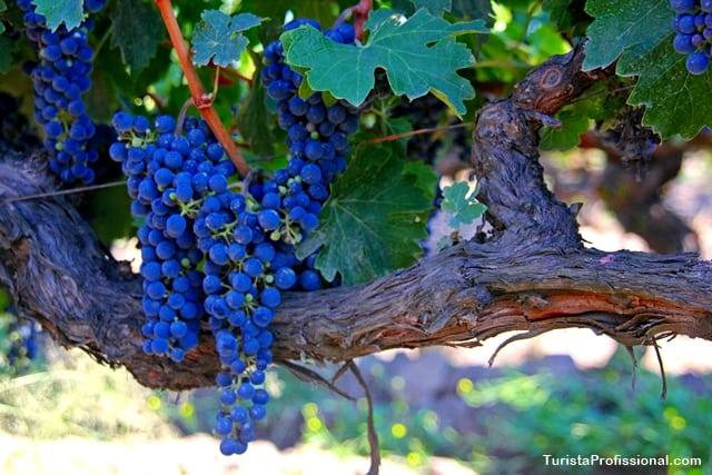 o que fazer no Chile - Vinhos do Chile: por que os vinhos chilenos têm tanta fama?