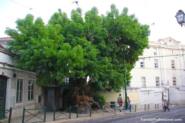rvores Lisboa - Conheça cada cantinho de Lisboa em um passeio diferente