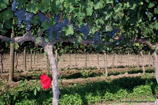vinhos e o Chile