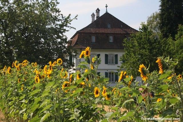 girassóis - Roteiro de 5 dias seguindo os passos dos Waldesians e Huguenotes na Alemanha e Suíça