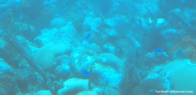 atrações turísticas de Barbados - Passeio de submarino em Barbados