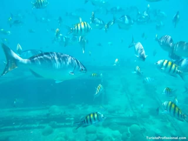 atrações turísticas de Barbados