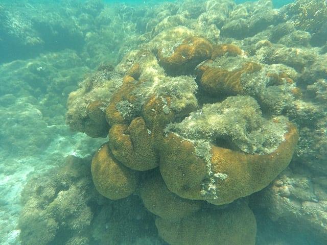corais em maragogi - Galés de Maragogi - um sonho azul!