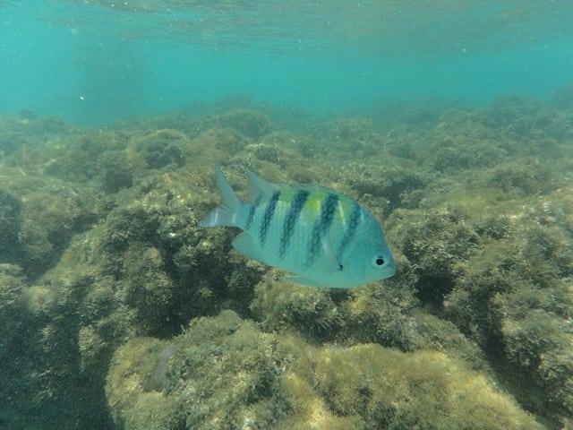mergulho maragogi - Galés de Maragogi - um sonho azul!