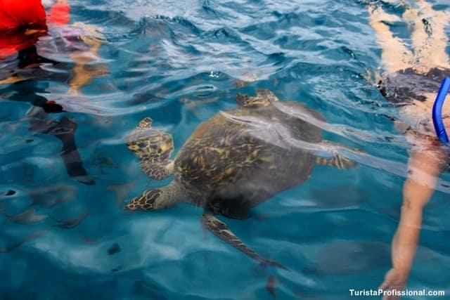 passeio com tartarugas - Passeio de barco em Barbados