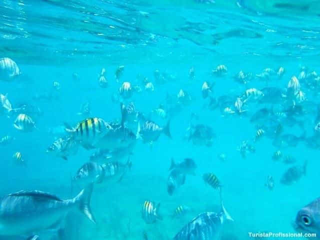 passeios em Barbados - Passeio de barco em Barbados