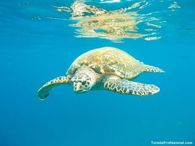 tartaruga marinha - Passeio de barco em Barbados