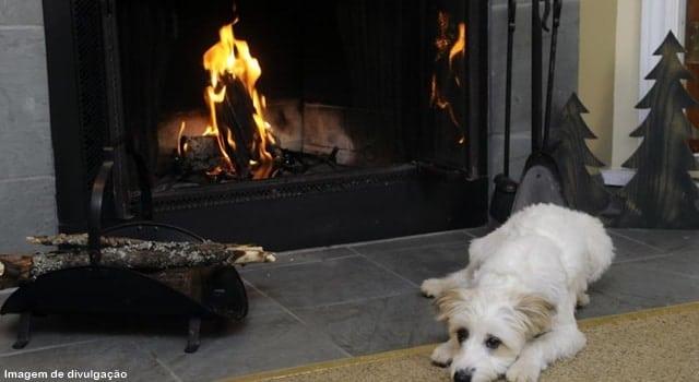 dica de hotel aceita cães