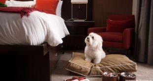 Hotel para cachorro