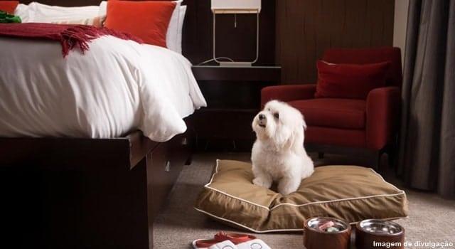 hotel para cachorro - Hotéis que aceitam cachorros