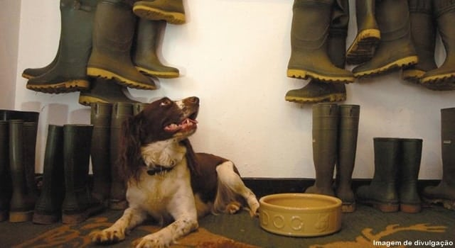 hotel que aceita cachorros - Hotéis que aceitam cachorros