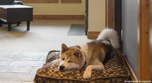 levar cachorro para o canada - Hotéis que aceitam cachorros