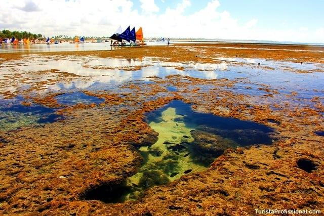piscinas naturais porto de galinhas - Porto de Galinhas: dicas de viagem para quem vai a primeira vez