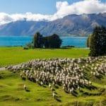 primavera na Nova Zelândia