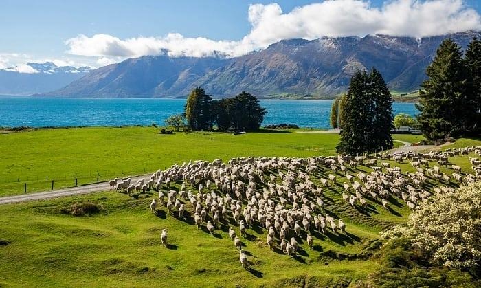 Primavera na Nova Zelandia - Dicas da Nova Zelândia para quem vai a primeira vez