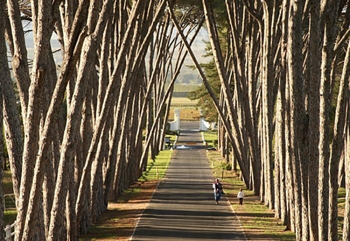 NEETHLINGSHOF vinicolas africa do sul - Rota dos vinhos na África do Sul