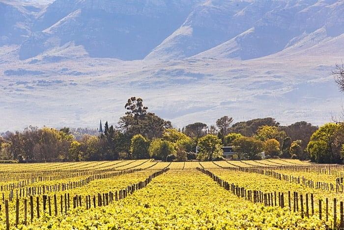 PLAISIR DE MERLE - Rota dos vinhos na África do Sul