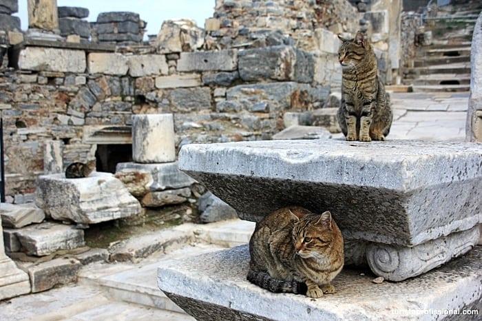 ephesus curiosidades - Como chegar e dicas para visitar Éfeso, na Turquia: uma joia da Antiguidade