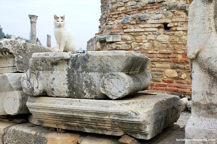 gatos de efeso - Como chegar e dicas para visitar Éfeso, na Turquia: uma joia da Antiguidade