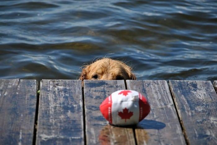 Dicas de como viajar com cachorro para o Canadá