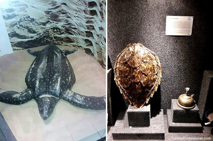 tartaruga marinha - Conheça o Museu Oceanográfico Univali, em Piçarras, SC