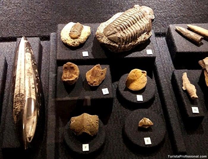 univali museu oceanografico - Conheça o Museu Oceanográfico Univali, em Piçarras, SC