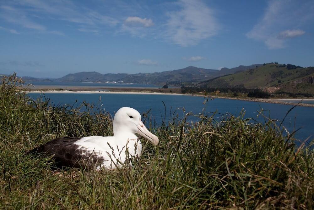 vida selvagem na Nova Zelândia