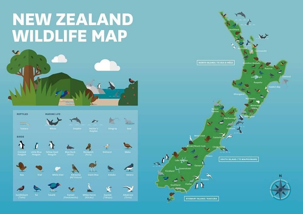 mapa da vida selvagem na Nova Zelândia