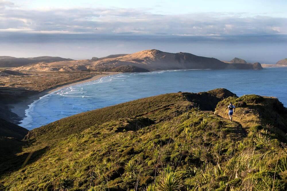 Wellington nova zelandia - Conheça as melhores trilhas de um dia na Nova Zelândia