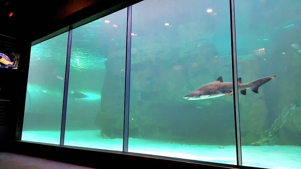aquario da cidade do cabo - Dicas da África do Sul de A a Z