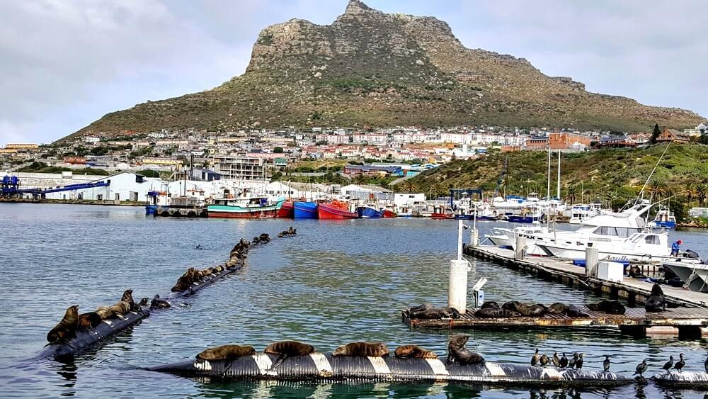 dicas da africa do sul passeio de barco - Dicas da África do Sul de A a Z