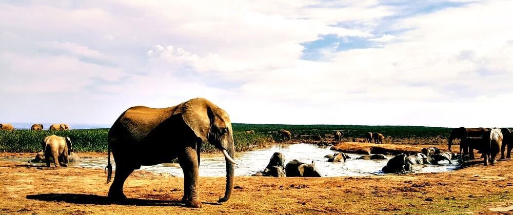 Elefante na África do Sul