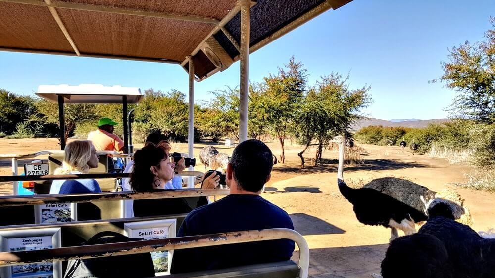 safari de avestruz africa do sul - Dicas da África do Sul de A a Z