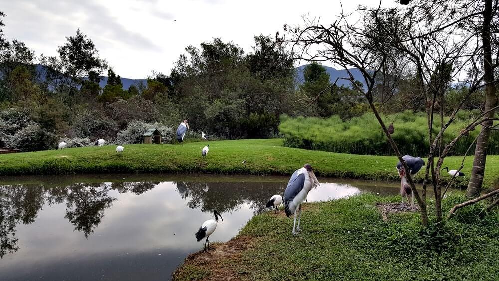 Santuário de vida selvagem na África do Sul