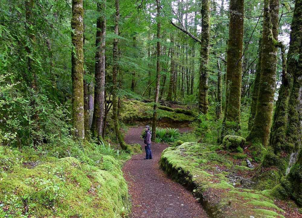 trilhas em Florestas e Lagos de Te Anau 1 - Conheça as melhores trilhas de um dia na Nova Zelândia