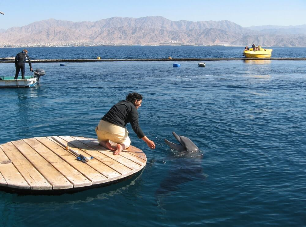 golfinho eilat israel - Dicas de Eilat, no extremo sul de Israel: o que fazer