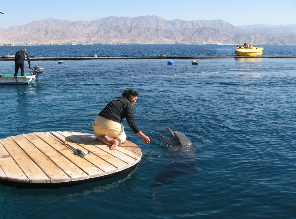 ver golfinhos em Israel Eilat