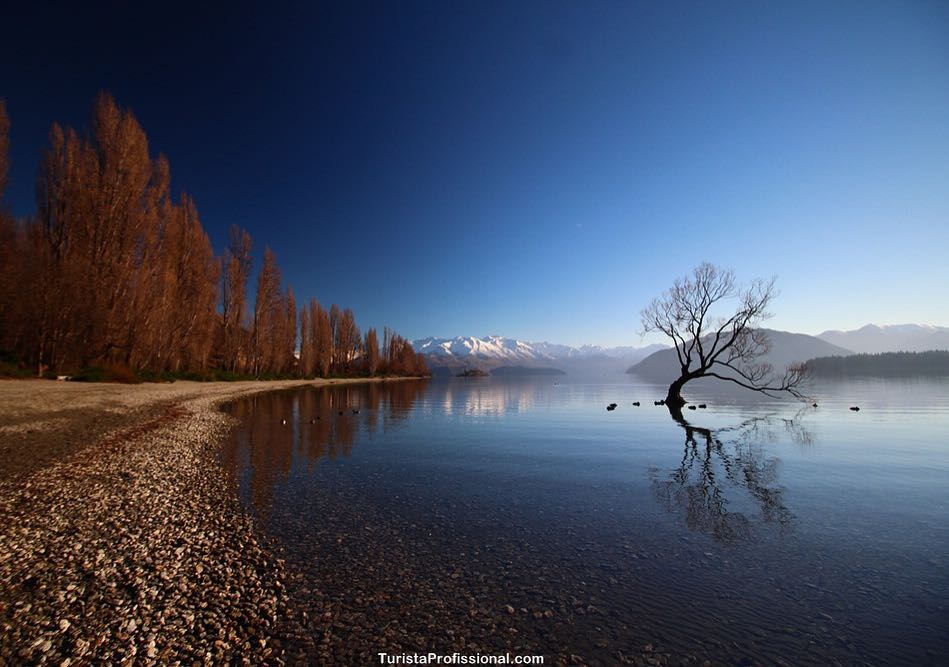 wanaka tree new zeland