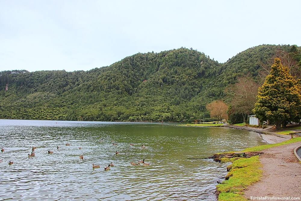blue lake rotorua - O que fazer em Rotorua: principais pontos turísticos