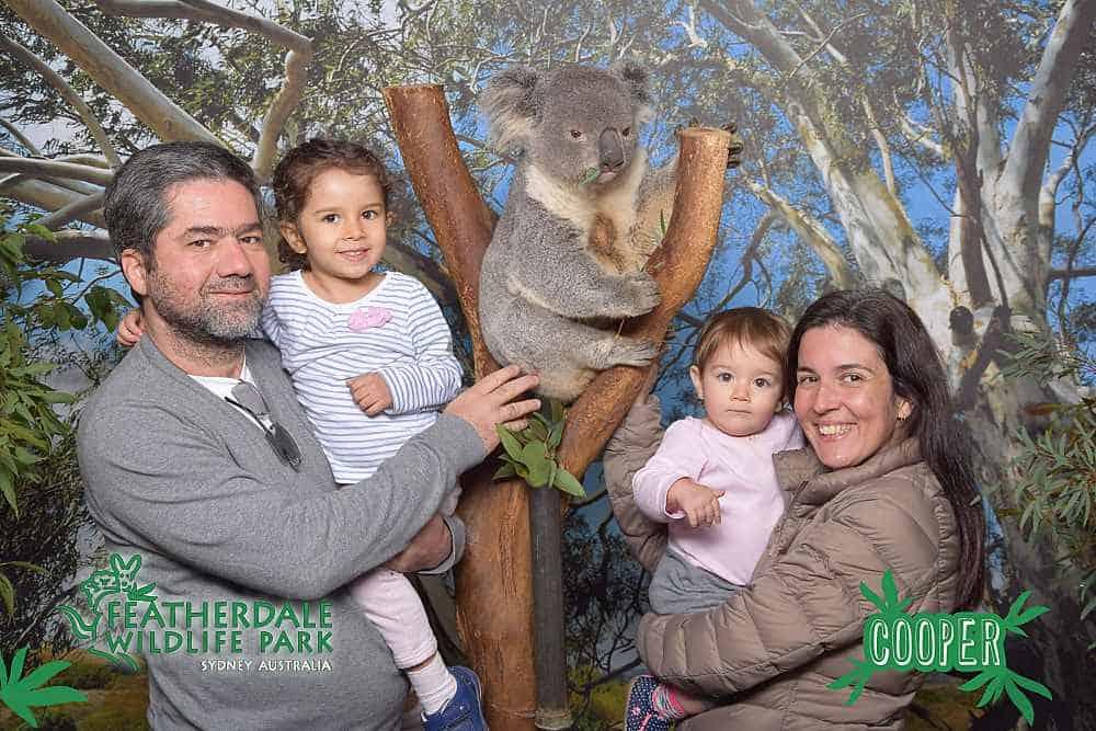 coala em Sydney