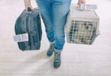 Levar gato no avião
