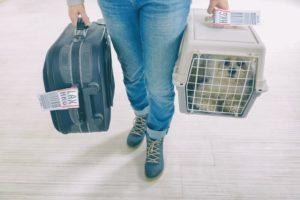 levar gato no aviao 300x200 - Nova Home