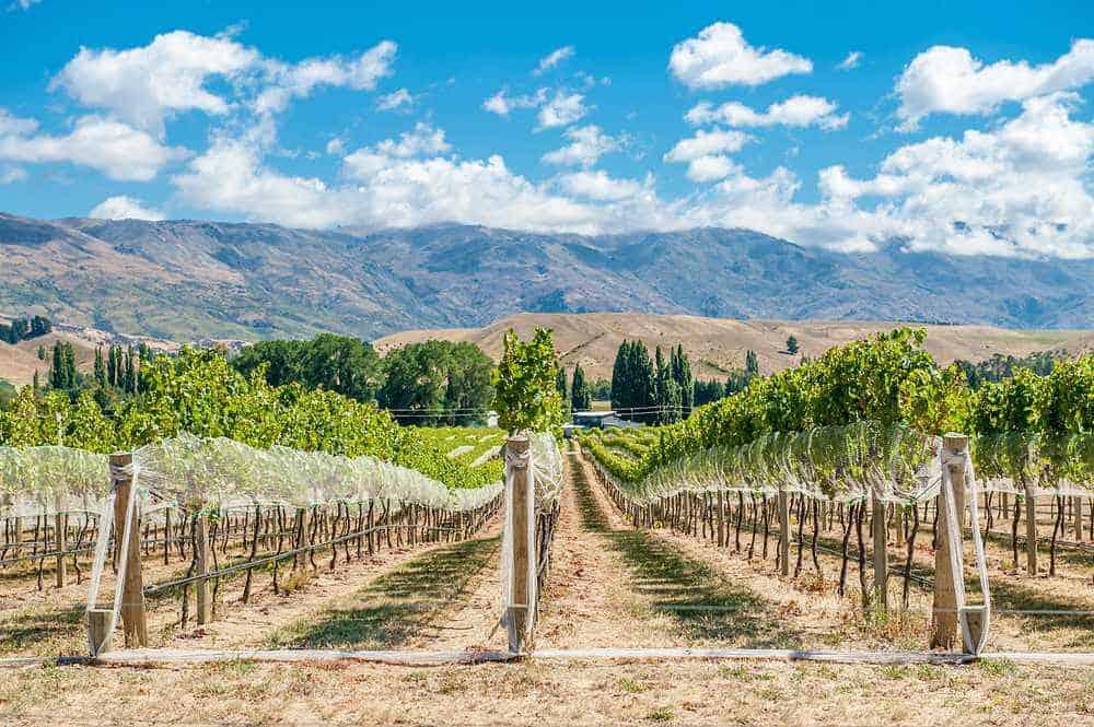 vinícolas na Nova Zelândia