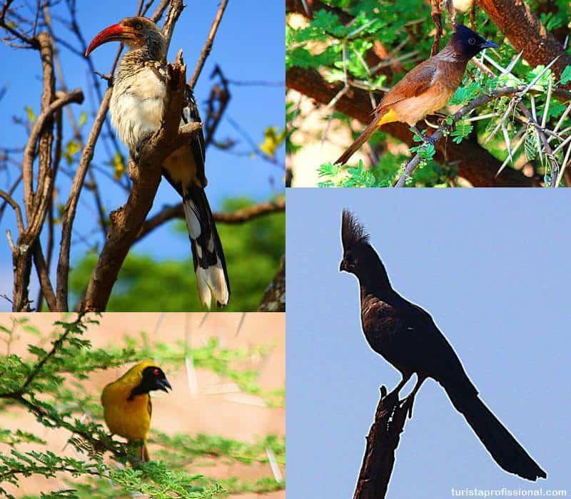 aves da africa safari - Safári com crianças na África do Sul