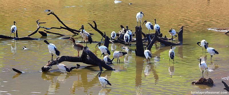 aves de parque da africa do sul - Safári com crianças na África do Sul
