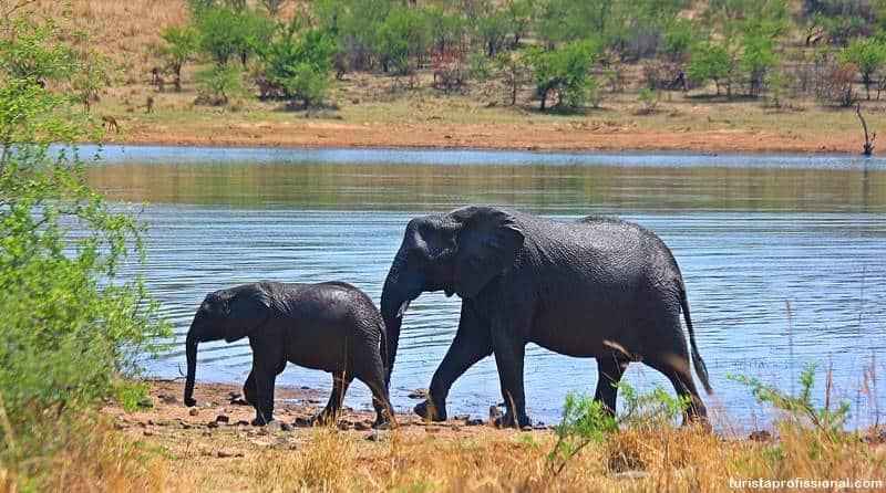 filhore de elefante - Safári com crianças na África do Sul