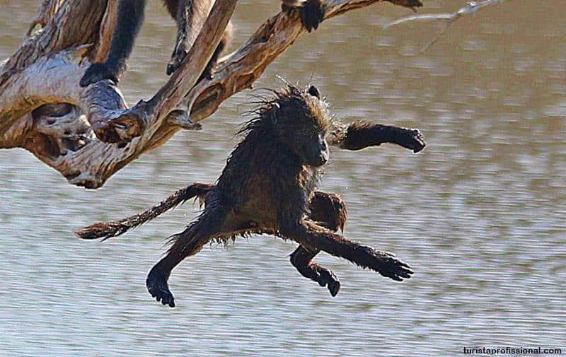 filhote de babuino - Safári com crianças na África do Sul
