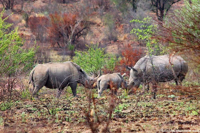 rinoceronte africa do sul - Safári com crianças na África do Sul