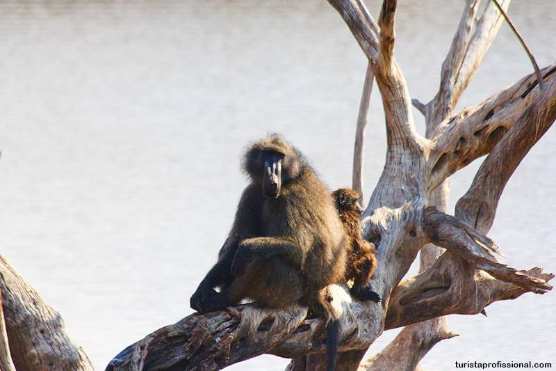 safari babuinos africa do sul - Safári com crianças na África do Sul