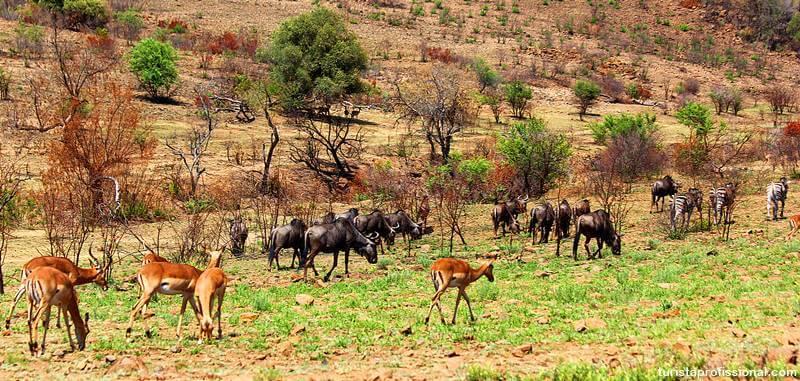 safari na africa do sul - Safári com crianças na África do Sul